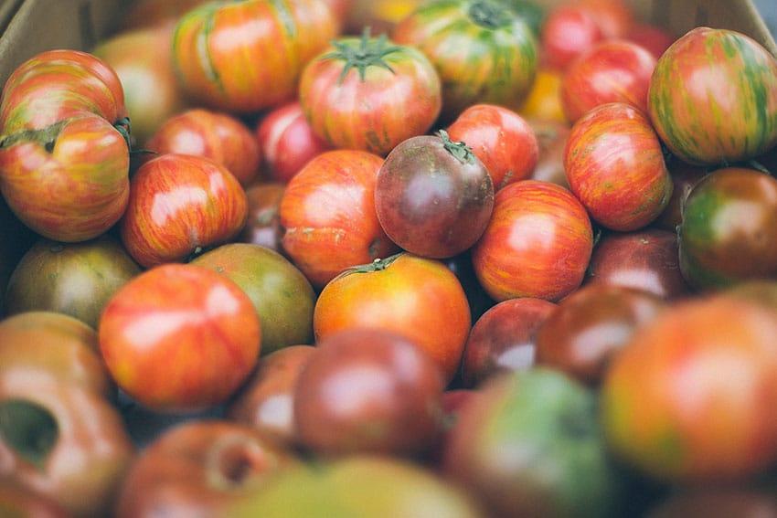 Lækre tomater i flotte farver